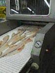 Инъекторы, Инъектор ручной, Инъектор Польша, Инъектор InwestPol, Inwestpol ANR-68, ANR-110, Инъектор  AN, Инъектор для рыбы, Инъектор рыбный, Инъектор Инвестпол